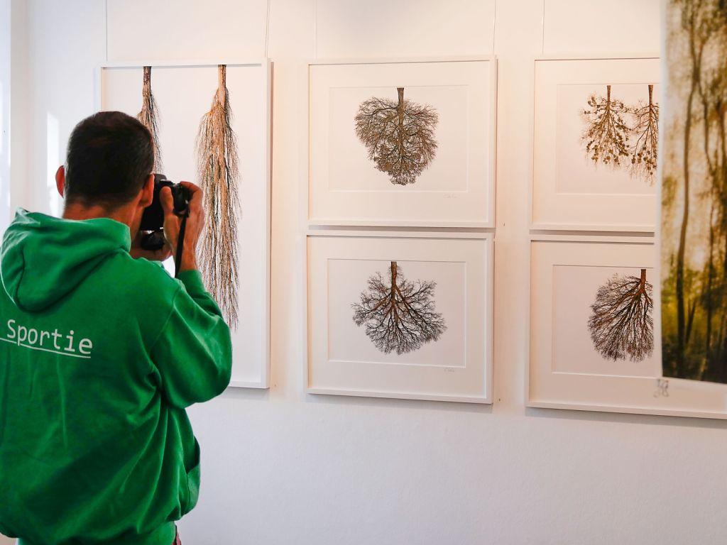 Serie Tree Crowns im Erdgeschoss